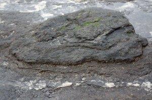 Layered peat