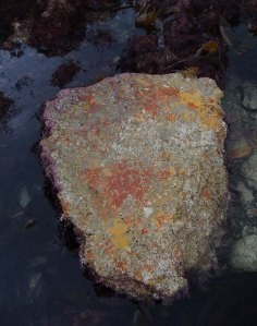 Exposed stone left by low water fishermen, leaving sponges to eventually die.